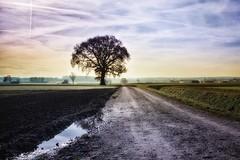121118_032_Moorenweis (blichb) Tags: germany landscape bayern deutschland bavaria herbst landschaft 2012 canon50d blichb moorenweis sigma2470mm128dghsm