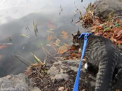 Moist Paws (SardineTea) Tags: nyc newyorkcity cats newyork cat kitten feline centralpark kittens kitteh rocket graytabby urbancats sardinetea