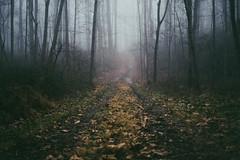 Mist {explored} (.monodrift) Tags: film fog photoshop f14 olympus faux summilux 25mm lightroom emulation em5