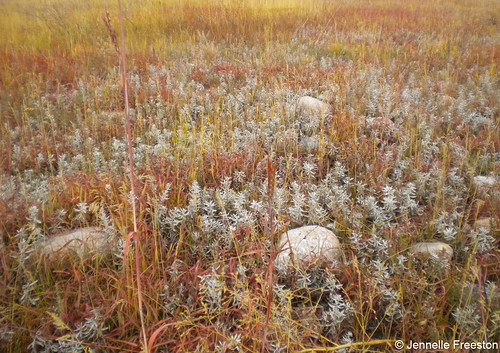 Photo - Prairie Patterns
