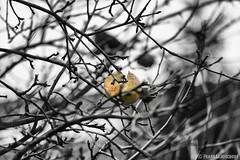 Das andere Vogelfutter 05.12.2012