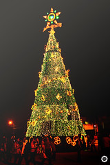 oh christmas tree! oh christmas tree! (AnaZamora) Tags: christmas light holiday tree night lights star team nikon low philippines 1855mm parol pinoy pilipinas paseodelmar d3100