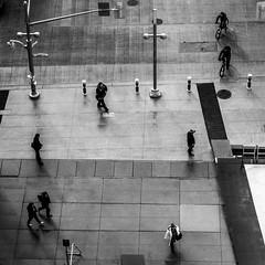 Go Your Own Way (Matt M S) Tags: street city cambridge people urban white ontario canada black eye birds canon matt square concrete photography hall downtown king view metro candid smith kitchener waterloo jungle area civic format region metropolitan core kw southwestern pedestrains tricities mattsmith kitchenerwaterloo downtownkitchener kitchenerontario waterlooregion 60d regionofwaterloo kitchenerdowntown kwawesome mattms dtklove kwontario