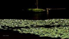 Le ponton (clairetresse) Tags: france pond nord ponton matin tang isre nnuphars