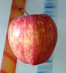 Apple (Sanjiv Gandhi2012) Tags: apple fruit health healthy juicy