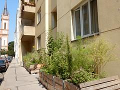 DSCN4656 (derudo) Tags: urbangardening grätzloase lebensqualität