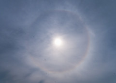 Eye in the sky (Marc Rauw.) Tags: halo sun sky meteorology weather circle circular rainbow iris clouds lookingup up landsmeer netherlands olympus olympusomdem10 omd em10 918mm mzuiko918mm mzuiko microfourthirds m43 43 eye eyeinthesky swift birds summer