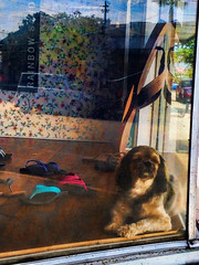 How Much Is That Doggy In the Window? (TuthFaree) Tags: elements window storefront dog animal sleeping fl florida iphone shoes reflection