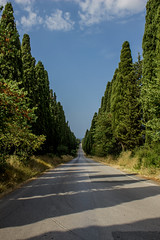 Bolgheri viale (jazz_0902) Tags: bolgheri viale tuscan tuscany trees toscana travel thestreet tuscanvineyards sky skyline strada street clouds nature nuvole