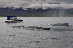 You Give WAY! (Frijfur M.) Tags: frijfurm eyjafjrur boat child girl humpbackwhale whalewatching clouds outdoor mountains sea canon5dmarkii tamron2875mm