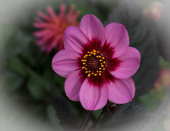 A splash of colour!! (Good Nature One) Tags: asplashofcolour flower macro nature bloom lilac red pink yellow brown green