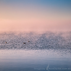 Fog (Images by Ann Clarke) Tags: august2016 seagulls abstract fog ocean pastel