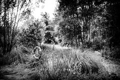 The swamp (Mathay Jean-Luc) Tags: houplinancoisne nordpasdecalaispicardie france fr canon eos 1100d rebelt3 sigma 1750mm bw bnw blackandwhite noiretblanc monochrome swamp marais forest fort trees water eau plants plantes vgtation vegetation daylight day contrast buoy boue atmosphere ambiance nature light dark sombre parc park country campagne woods mono extrieur outdoor glauque murky drab mysterious ombres shadows