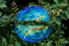 A world in a bubble (andycosta91) Tags: bolladisapone macropic natura riflessi reflection nature macro piedmont piemonte italia italy bolla bubble