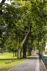Squinty Tree at Haugh Park (RagbagPhotography) Tags: cupar fife scotland view river eden burn water path walk green tree leaf leaves architecture building squint straight leaning rail grass park
