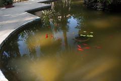 Pesci rossi (Bazinga!) Tags: siviglia sevilla seville realalcazar alcazar jardines jardinesdelalcazar pescirossi goldfish goldfishes pezdorado
