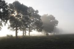 _MG_9136 (grzegorz_63) Tags: mist fog trees field sunbeams sunrise canon70d