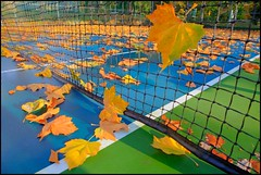 Leaves win, 800-Love (HereInVancouver) Tags: autumn fallleaves canada colour leaves vancouver bc stanleypark westend hdr tenniscourt tenniscourtinautumn