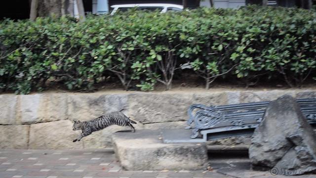 Today's Cat@2012-11-11