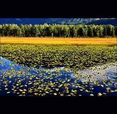 - (klaus53) Tags: autumn trees lake reflection alaska nikon sewardhwy blinkagain