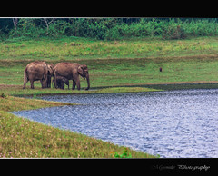 Elephant Family....! (Mysmile Photography) Tags: family wild india lake elephant forest river kerala thekkady kumily me2youphotographylevel1