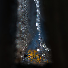 Treasure (- David Olsson -) Tags: november colour macro closeup square droplets drops backyard nikon shiny treasure sweden bokeh small tripod spiderweb pearls karlstad tiny opening waterdrops tamron 90mm sparkly 90 narrow squarecrop 2012 dx shortdof yellowdots d5000 bokehdots davidolsson