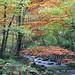 Parque Natural Muniellos Asturias