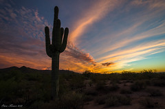 Sonoran Sunset II (Steve Flowers) Tags: sunset arizona nikond7000 nikon1024mmlens