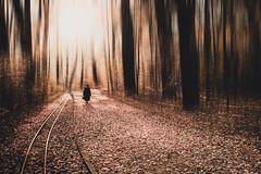 Vanishing Woods (Philipp Götze) Tags: park street november autumn trees winter people sun fall strange backlight forest dresden woods path herbst surreal motionblur vanishing sonne wald weg gegenlicht bewegungsunschärfe grosergarten