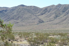 Golden Bee Mine (simbajak) Tags: park tree mine desert joshua low bin national sonoran ore joshuatreenationalpark blackeaglemineroad