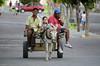 A Volta (Fred A. Delgado) Tags: street men child donkey burro jumento rua criança homens