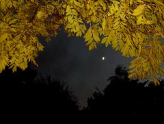 wee moon (spratpics) Tags: england moon leaves night teesside billingham spookymagic weemoon teesvalleyengland spookyartworkandphotographybypaulwalker