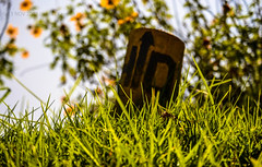 Random..!!! (HareshKannan) Tags: flowers flower green grass yellow rock nikon random sunny ooty 55200mm d3100