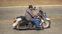 Harley Rider on Mulholland Highway (Have Fun SVO) Tags: bike snake harley motorcycle hd davidson rockstore mulhollandhighway