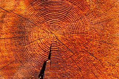 slice of dry wood timber natural background (Maxim Tupikov) Tags: life wood old plant abstract detail macro tree history texture industry nature floral closeup pine circle wooden log pattern cross flat natural cut forestry timber background hard logging structure ring growth slice crop round stump backdrop material years aged annual dried split cracks fiber section concentric circular lumber textured ridges