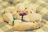 First day of the rest of your life !! (.:: Maya ::.) Tags: sleeping born golden puppies day first retriever just mayaeye mayakarkalicheva маякъркаличева