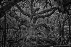 Myakka State Park Deep Dark Forest (John Elias Photography) Tags: park county old white black forest dark scary oak ancient woods moody state character deep creepy sarasota myakka johneliasphotography