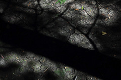 Ombres au sol (Eric Dupuis) Tags: trees light canada sol nature leaves forest photography photo eric artist foto photographer photographie shadows quebec earth lumire montreal ground arboretum september arbres terre organic morgan fotografia septembre fort feuilles 2012 artista fotografo ombres organique artiste photographe dupuis ericdupuis sainteannedebellevue arboretummorgan ricdupuis