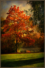 A bench by the lake (FocusPocus Photography) Tags: autumn lake tree fall texture germany bench deutschland see stuttgart herbst bank baum badenwuerttemberg textur coth supershot maxeythsee lenabemanna