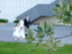 Sprouting together (El Saskuas) Tags: wedding cinema love happy dance official flickr dancing amor boda award happiness felicidad sprout baile orton happyness amor saskuas