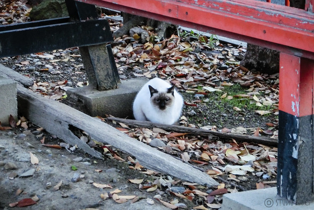 Today's Cat@2012-11-29
