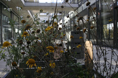 Aufbau Haus | filmmann.de 5487 (foto4berlin.de) Tags: berlin kreuzberg moritzplatz stadtentwicklung foto4berlinde filmmannde aufbauverlag aufbauhaus
