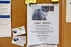 [NOTICE] Standish Ericsson: Lost Kitty (tbone_sandwich) Tags: sign cat lost boots ericsson kitty minneapolis neighborhood bulletinboard grocerystore lostcat supervalu bergans standish