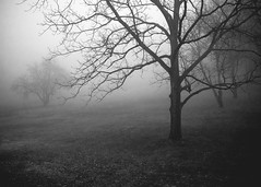 a beckoning (No longer active. Search 'Colin Gallagher | Photog) Tags: morning blackandwhite mist nature fog dark photography mood eerie fujifilm xpro1 colingallagher lensblr photographersontumblr