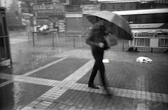 (David Davidoff) Tags: street leica people umbrella rainyday kodak tmax candid m3 summaron bwfilm