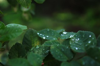 drops and leaves 2