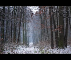 in the colourless world (JoannaRB2009) Tags: trees winter plants white mist snow nature fog forest woods path air poland polska asleep colourless beechtrees paprotnia