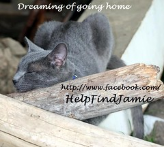 Dreaming Of Going Home (Jamie's Team) Tags: cat lost lostcat wwwfacebookcomhelpfindjamie