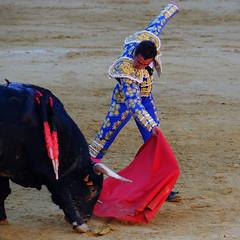 El Maestro El Fandi (Fotomondeo) Tags: alicante alacant espaa spain hoguerasdesanjuan fogueres toro toros corridadetoros matador torero bull bullfight bullfighter bullring elfandi fujifilmxm1