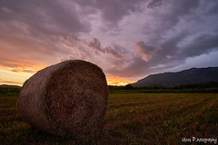 Vipava valley sunsets (Uros P.hotography) Tags: awesome amazing beautiful breathtaking color excellent fantastic hiking incredible nice perfect stunning superb trip adventure unique view unforgettable extraordinary exceptional brilliant glorious striking aweinspiring stupendous urosphotography moody shadows travel tourism memorable remarkable tour journey light time passing sony a7ii mm 1635 fullframe nature sunset sky cloud forest tree path slovenija slovenia vipava valley vipavska dolina hay bale sunflower seno